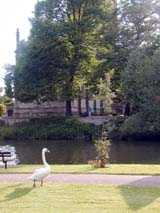 Swan by the river (161 kbytes) - Click to enlarge
