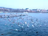 Zurich, Birds in Flight (60 kbytes) - Click to enlarge
